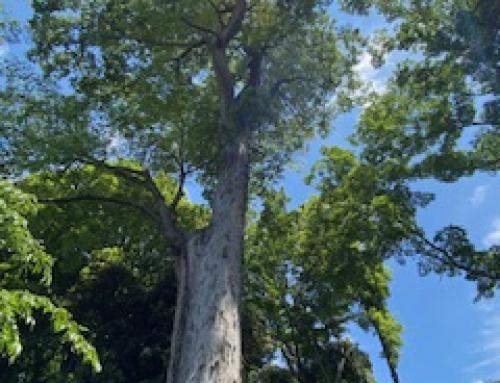 ☆ぼくの木・わたしの木☆